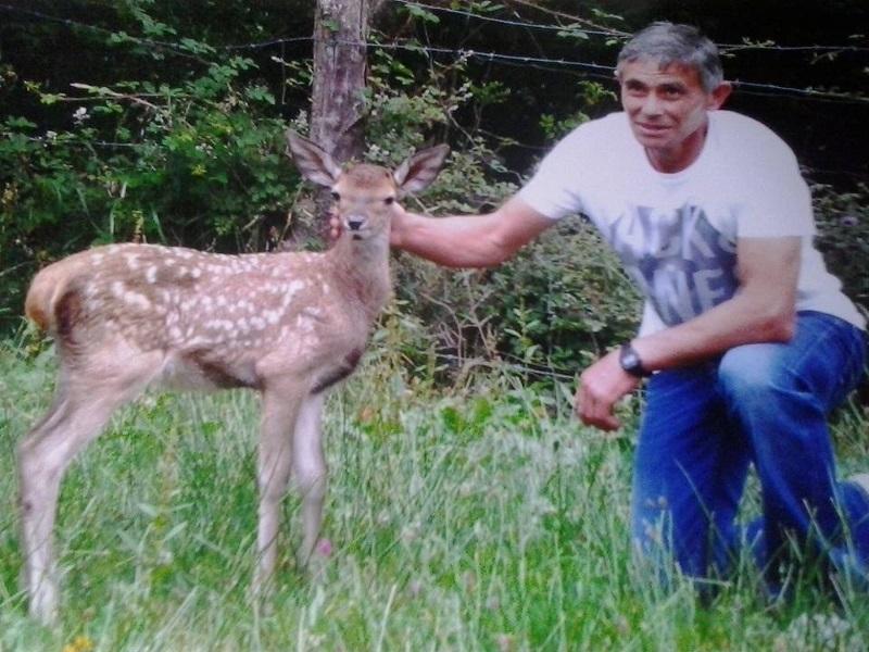 Un véritable lien avec Bambi