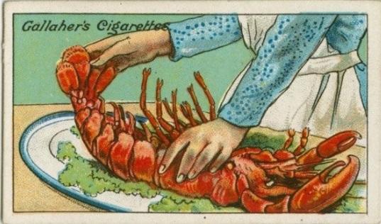 Pour vérifier si un homard est frais, il suffit de tirer et d'allonger la queue. Si elle se repositionne au moment de la relâcher, c'est qu'il est frais.