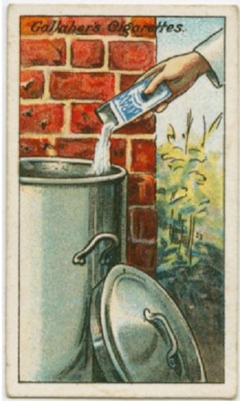 Utiliser de la poudre de borax pour éviter que des insectes profilèrent dans les poubelles