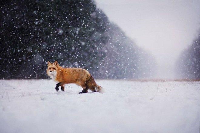 Une magnifique photo pour un magnifique animal