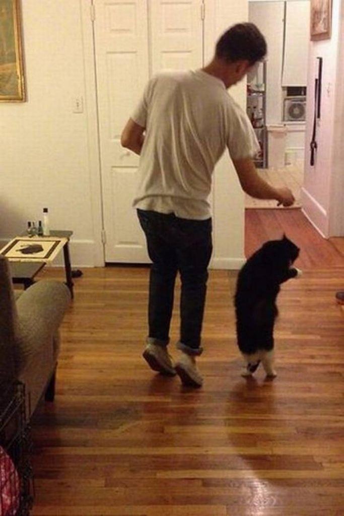 La danse maître VS chat