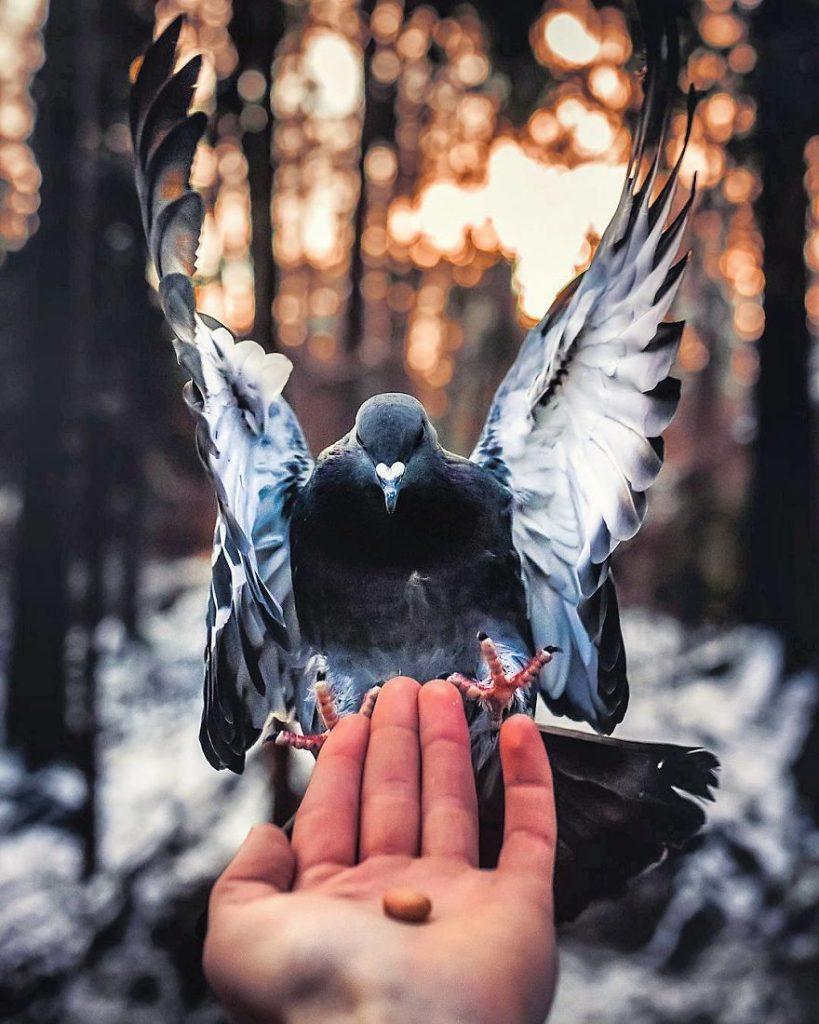 Un pigeon en pleine lumière