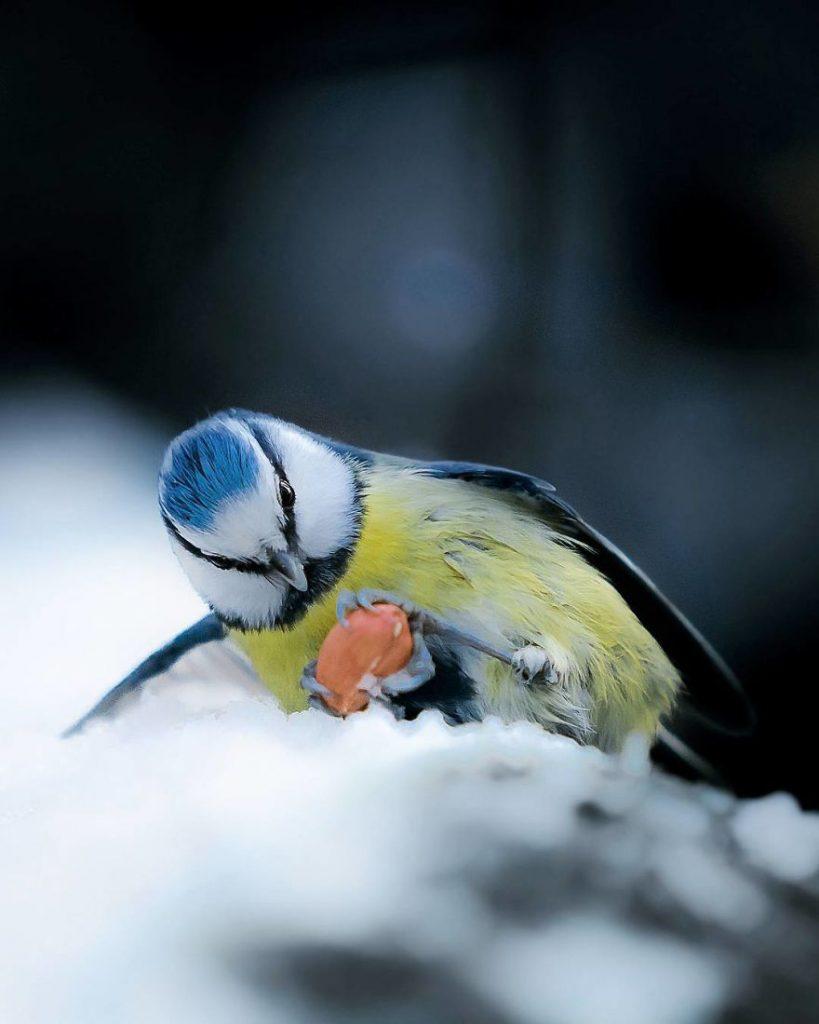 Un oiseau tenant son repas dans le creux de ses pattes
