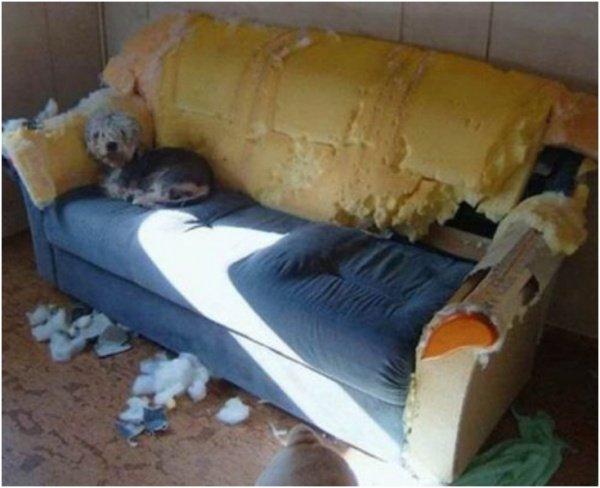 Je t'avais prévenu : il ne fallait pas me laisser seul. Et puis, ton canapé n'était pas beau, avouons-le!