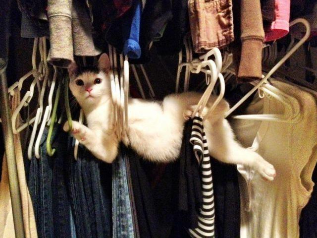Ce chat veut mener la belle vie d'un cintre, en suspension
