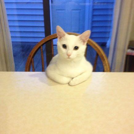 Mon chat demande de la nourriture de cette façon.