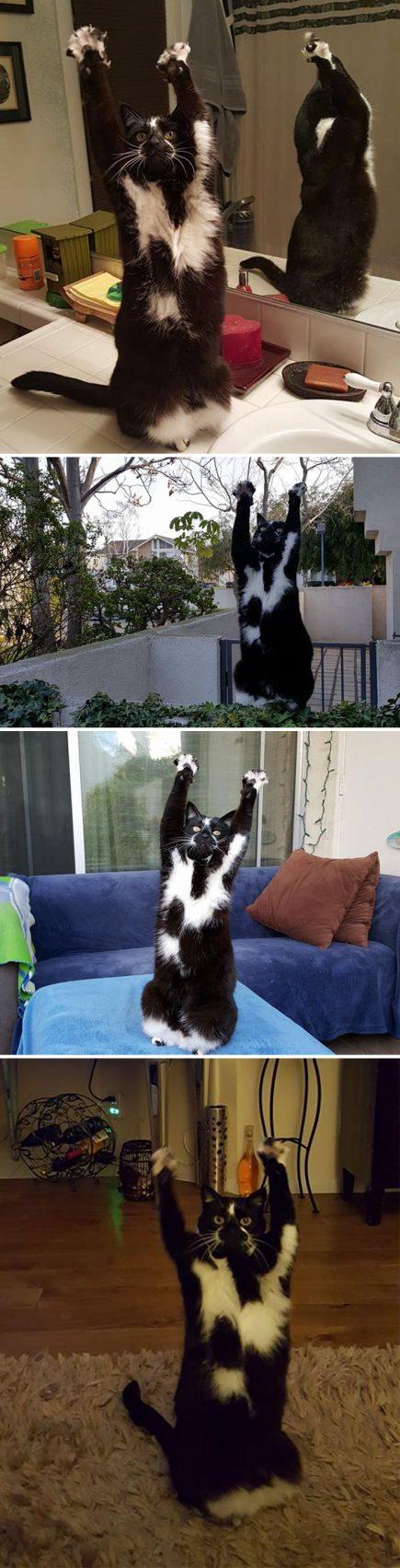 Le chat de mon ami fait comme ceci