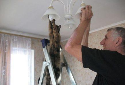 Combien de chats pour changer une ampoule ?