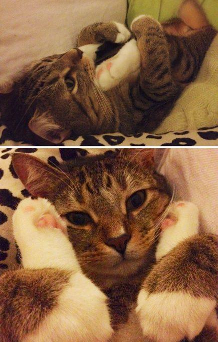 Ce chat aime faire de drôles de choses