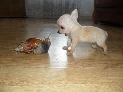 Une vilaine rencontre pour le petit……..