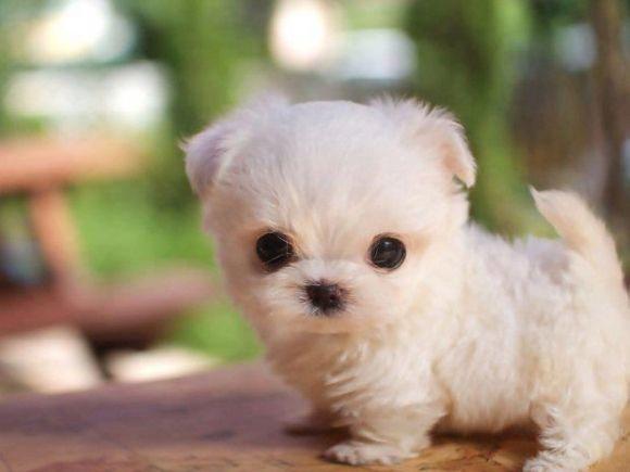 Le petit Pupy