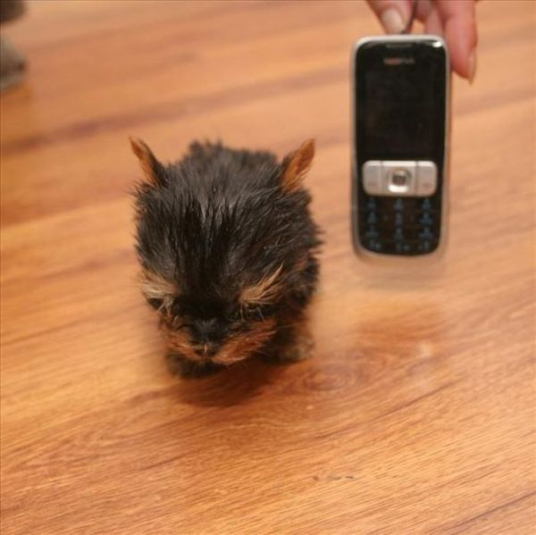 Pas plus gros qu'un téléphone portable…
