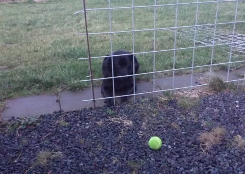 Impossible d'aller chercher la balle il y a une clôture……. Heu!!!!!