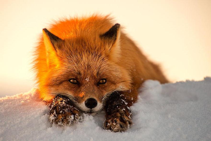Le repos du guerrier sur la neige du nord de la Russie