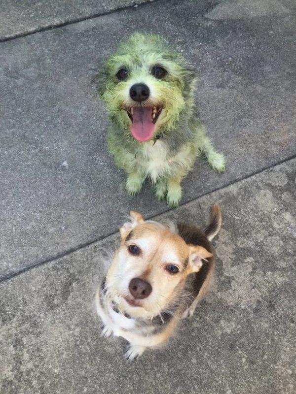 Devinez qui m'a aidé à tondre la pelouse?