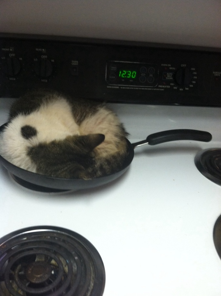 L'heure de la cuisson…