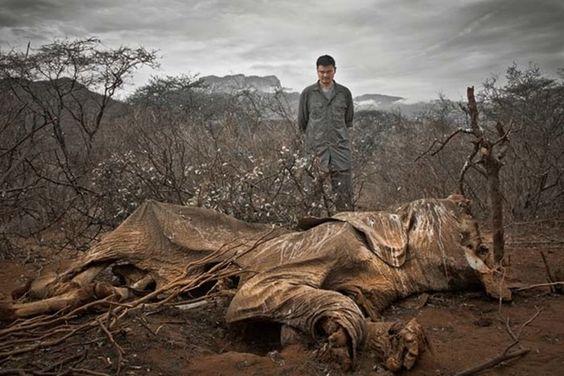 Un éléphant qui est mort de faim….