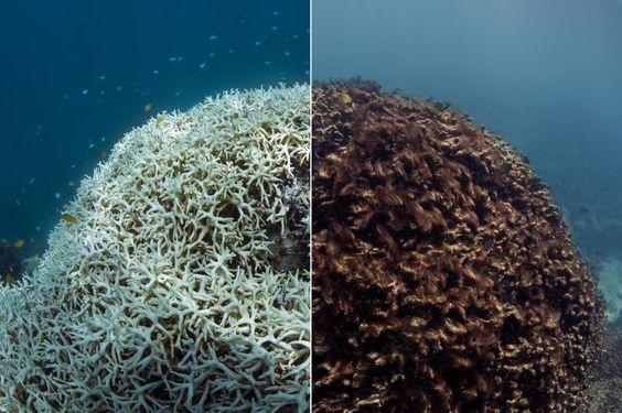 La détérioration des coraux.