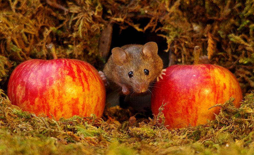 Entre 2 pommes…