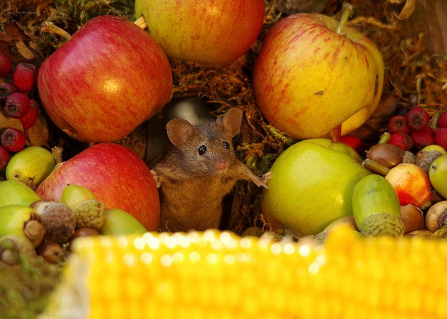 Un abri pour les souris