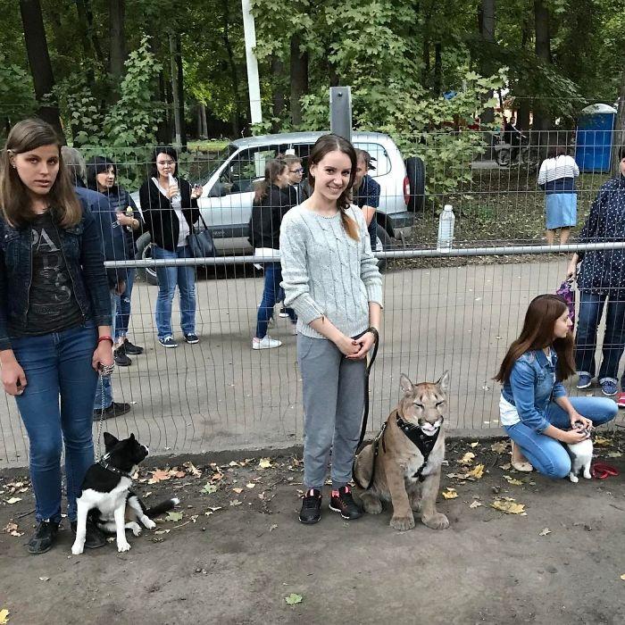 Une école pour les chiens