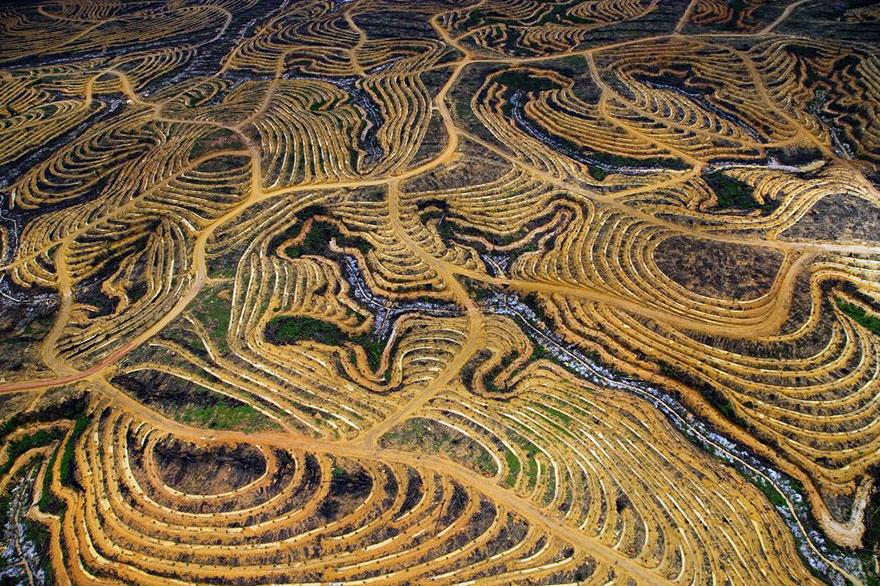 Forêt indonésienne transformée en palmeraie