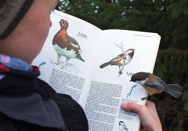 L'oiseau se pose sur sa page du livre…!!!!
