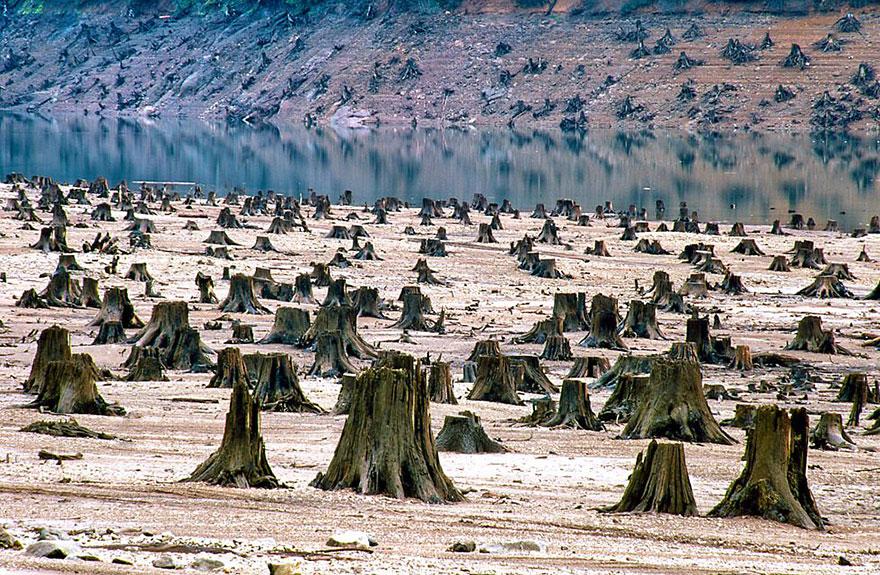 Forêt nationale de Willamette, Oregon (États-Unis), déforestée à 99%