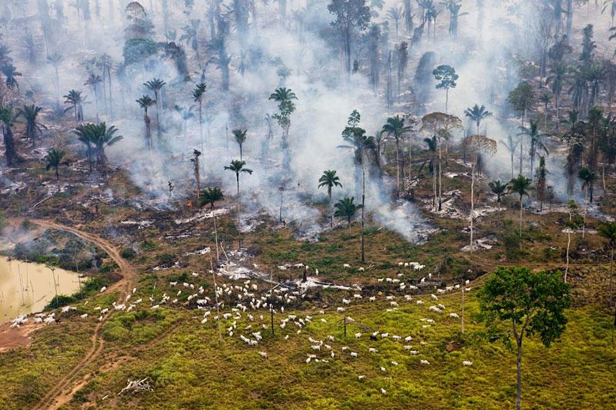 Une partie de la jungle amazonienne au Brésil, incendiée pour être «recyclée»