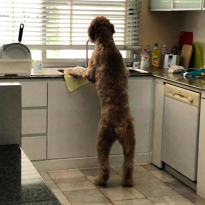 L'heure de faire la cuisine!