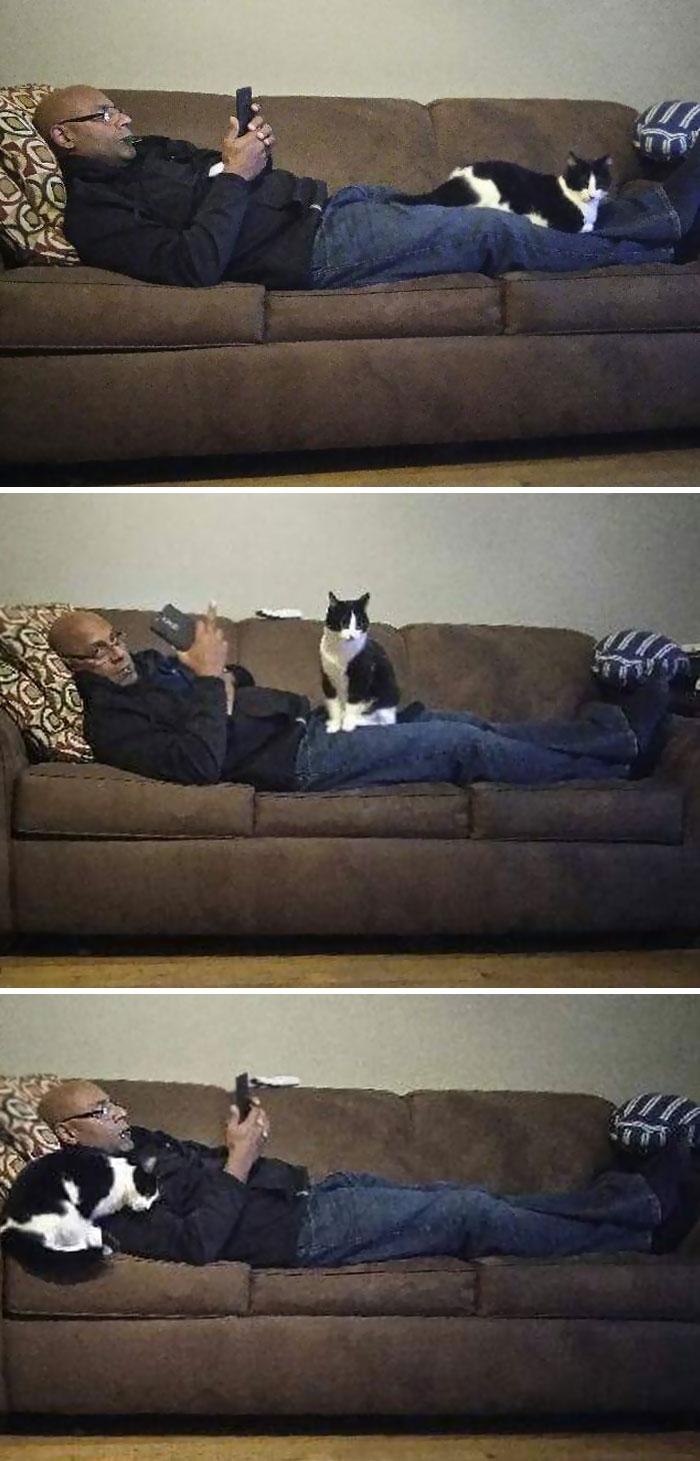 Notre chat n'aime que notre père qui la déteste