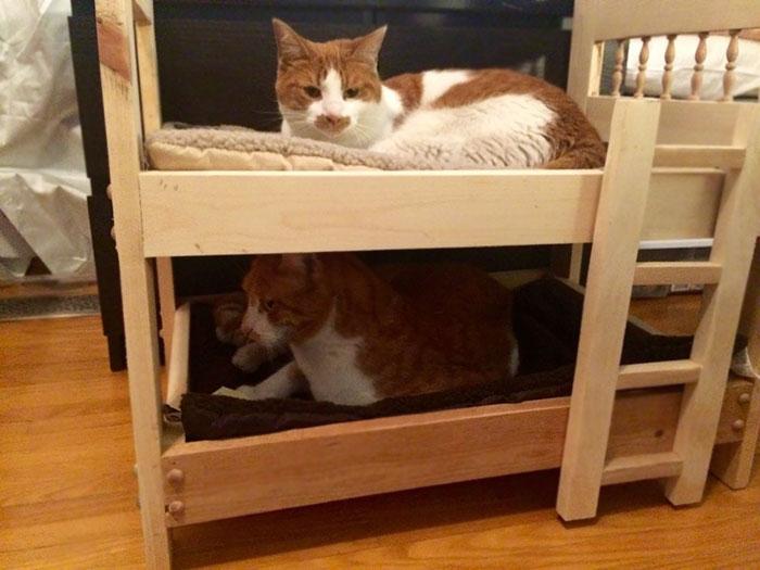 Mon père, qui déteste les chats, construit des lits superposés pour eux!!