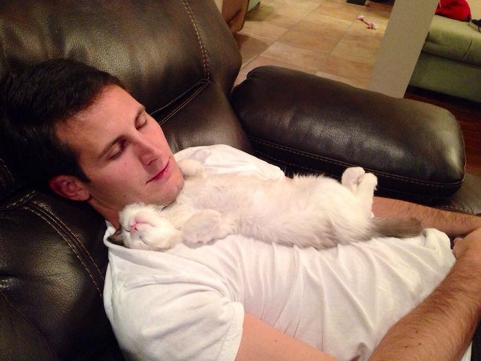 Il disait ne pas aimer les chats. Certain?