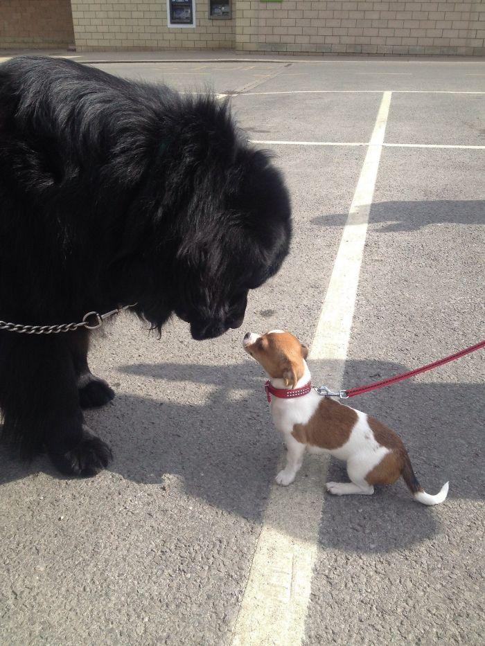 L'énorme et le petit !!