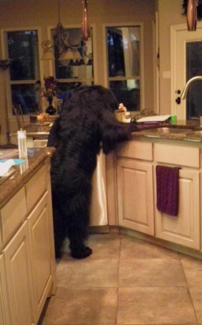 Bon, il y a quoi pour dîner?