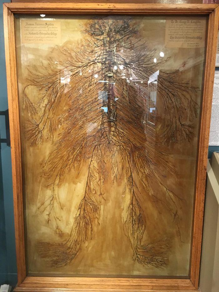 Ceci est un système nerveux humain intacte