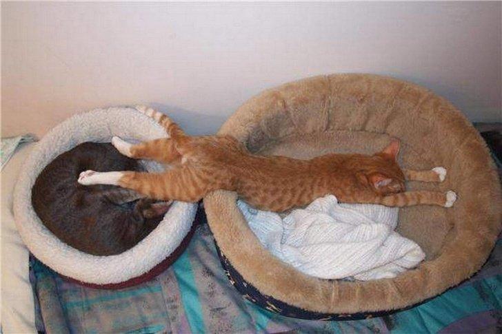 Moi je veux les 2 lits
