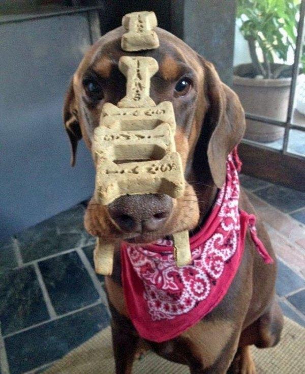 Le chien le plus patient du monde…